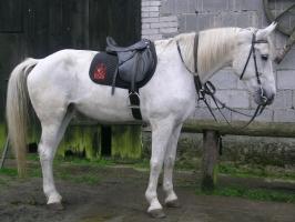 Konie_10