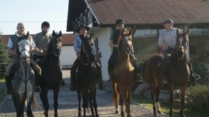 konie_1