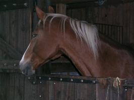 Konie_9