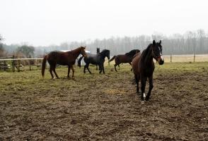 Nasze konie _2