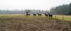 Nasze konie _3