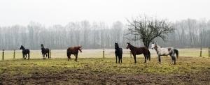 Nasze konie _4
